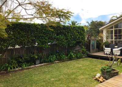 Hedging and Garden Maintenance in Avalon