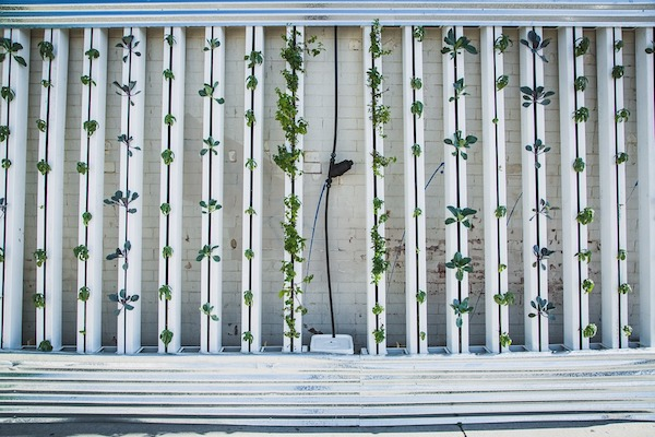 How to create a garden oasis with strata landscaper in Sydney