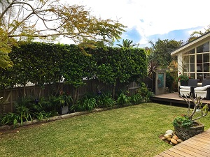 garden-maintenance-avalon-ccandm-landscapes-garden-edging