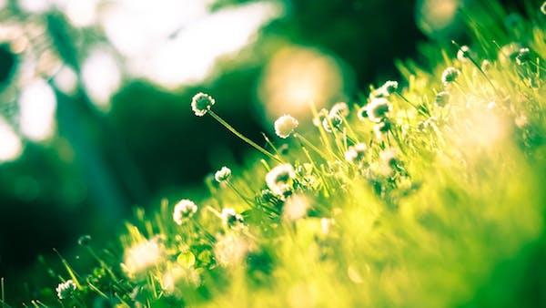Summer garden residential garden maintenance services checklist